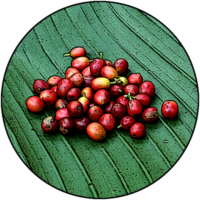 [Kaffeepur.ch] Logo Yirgacheffe